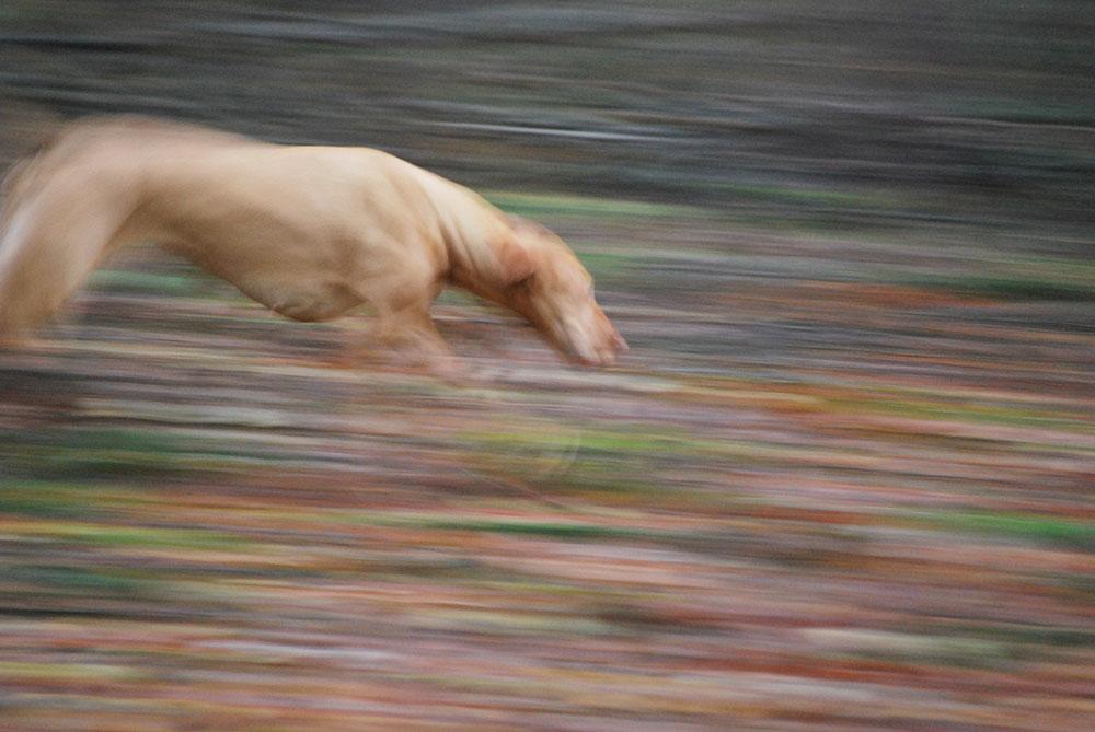 Extra toezicht op loslopende honden