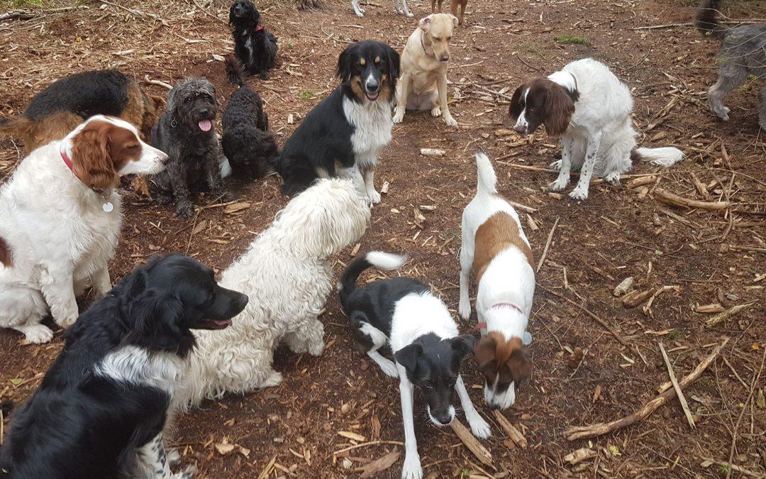 Speciaal voor honden-uitlaatservices